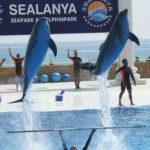 Экскурсии в Турции — Дельфинарий