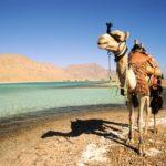 Тез Тур рассматривает возможность предварительного заказа на путевки в Египет