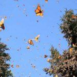 Экскурсии в Греции — Филеримос, Долина Бабочек