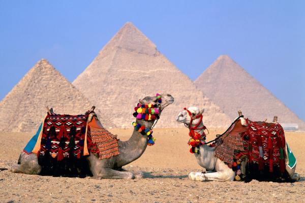 продажи путевок в Египет