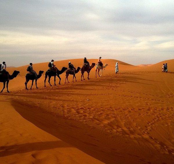 сафари в пустыню