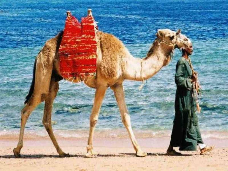 Советы женщинам в Египте