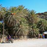 Экскурсии в Греции (о. Крит) — Пальмовый лес Ваи.