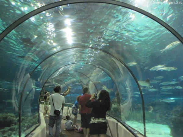 океанариум в Барселоне