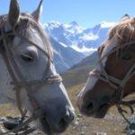 Поход на лошадях в Белуху