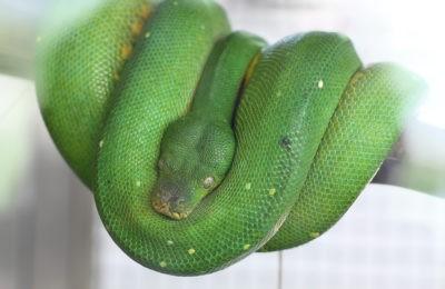 змеи тайланда