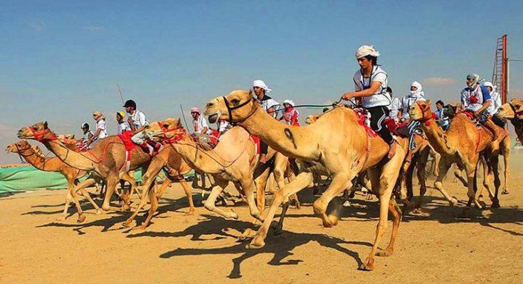 верблюжьи бега