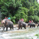 Экскурсии в Таиланде — Сафари на слонах и рафтинг